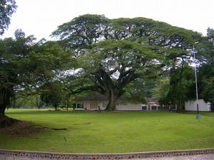 Bogor_07_021