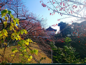 0020141121_yasukuni_175