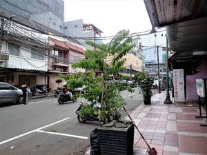 Bm_marufukudoori
